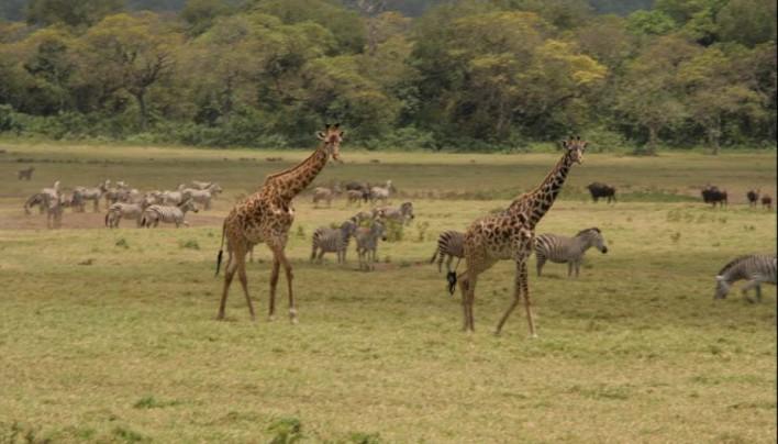 Загадочная Танзания!