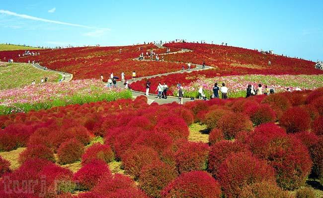 Парк Хитачи, Хонсю — Япония!