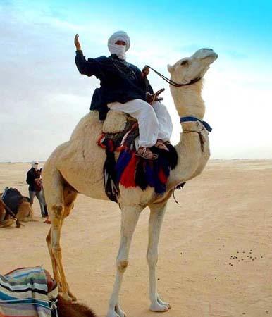 Тунисский бедуин на верблюде.