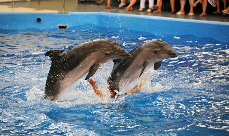 Дельфинарий-в-Голубицкой