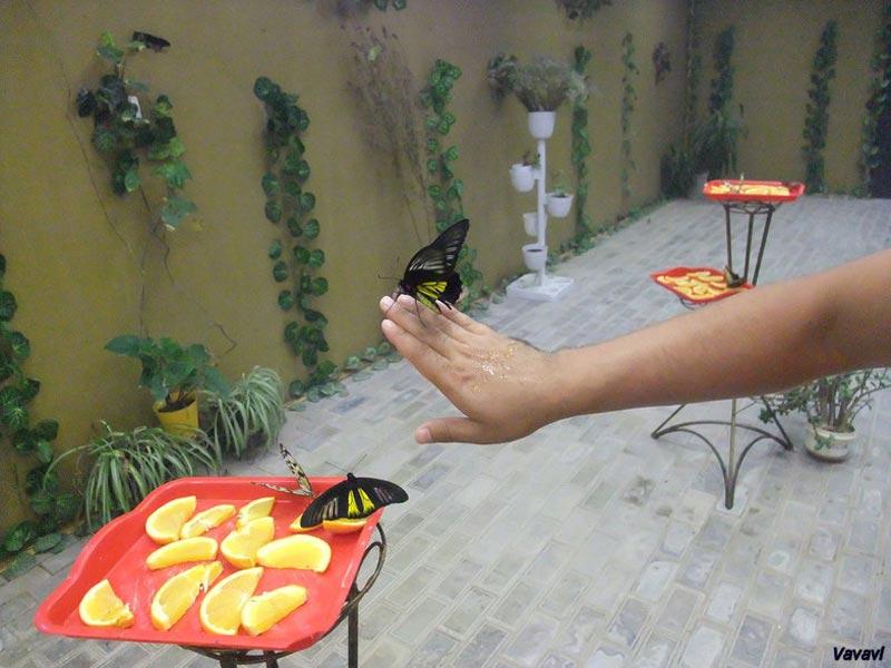 Ферма-бабочек-в-станице-Голубицкой