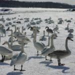 Горные лыжи, цветущие поля, фестивали, культура омотэнаси – все это Хоккайдо